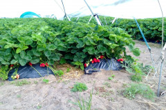 hu-elevated-beds-small