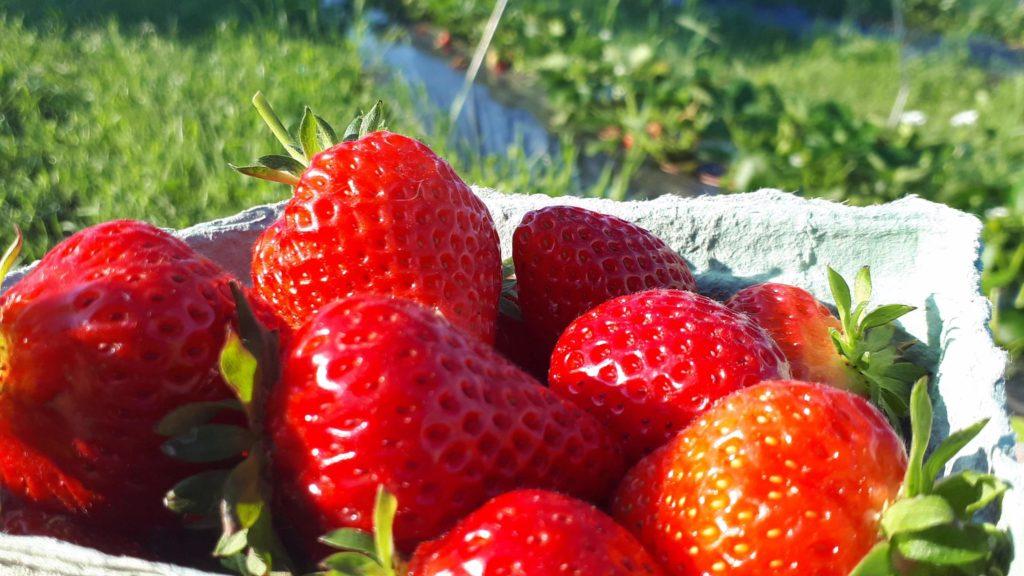 Bio Strawberries